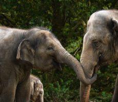 Elephants deserve better, too.