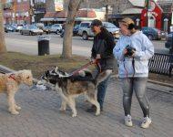 Calgary sled dog vigil