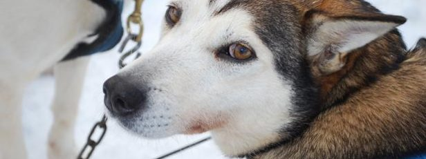 Introducing Canada's toughest animal-protection laws