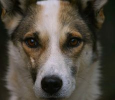 Will you vigil for the sled dogs on April 23rd?