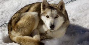 UK lawyer responds to B.C.'s new animal protection legislation