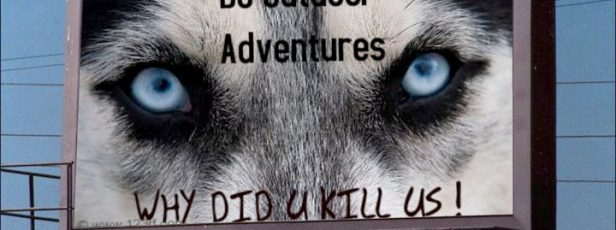 April 23rd Vigil for the lost lives of 100 Sled Dogs