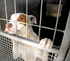 Why shelters kill animals in their care